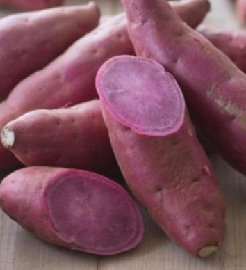 Certified Purple sweet potato fortified with Vitamin (minimum 1000 cuttings)